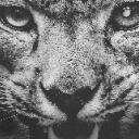 雪豹画质助手免费版